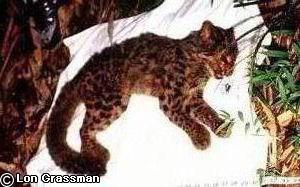 Vieille femelle endormie